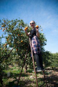 synne-i-appelsintraerne